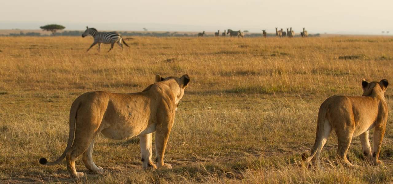 私人包机观赏狮子大迁徙