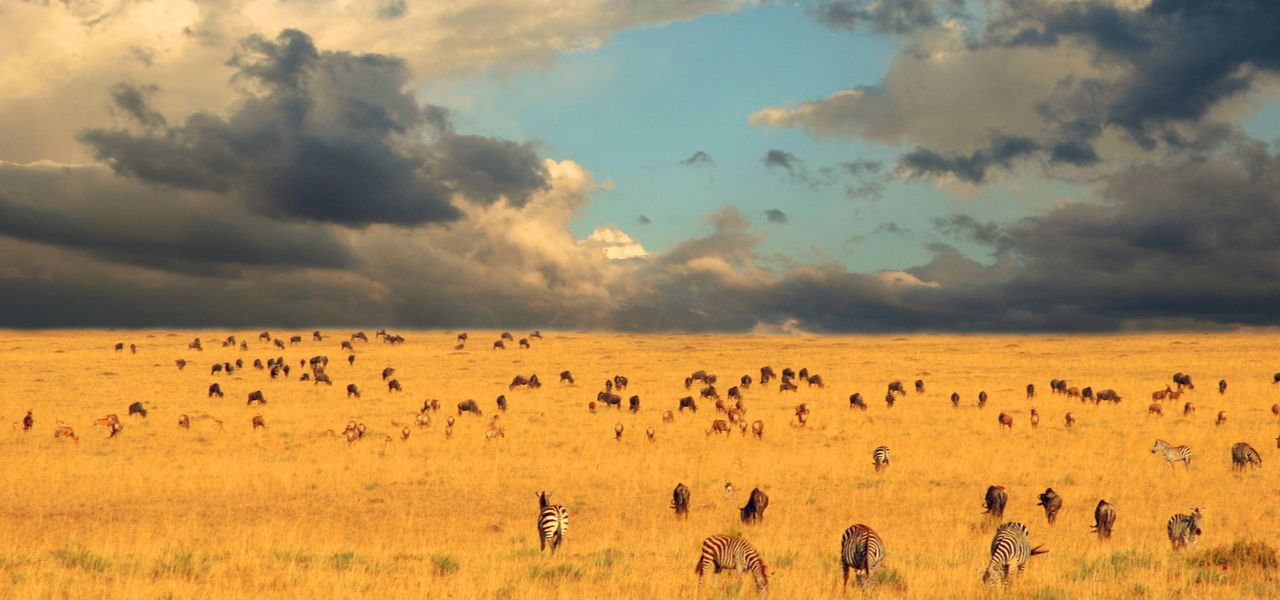 包机前往坦桑尼亚平原