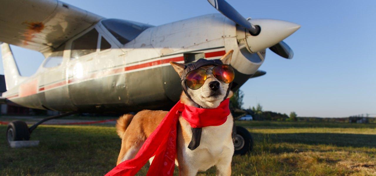 小型飞机托运宠物